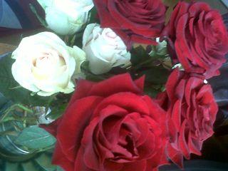Roses_annelolotte_softparis